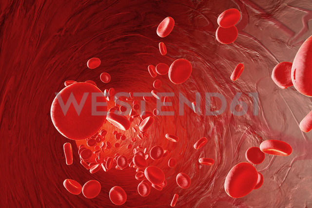 Erythrocyte cells flowing in an artery, 3D Rendering - SPCF000087
