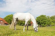 White horse grasing - KLRF000469
