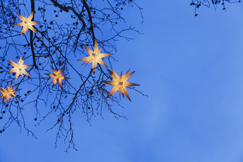 Lighted Christmas stars hanging in branches - GW004870