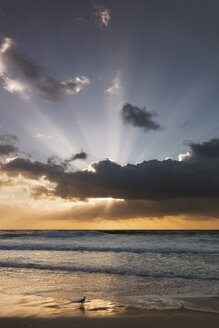 Australia, New South Wales, beach at sunrise - GOAF000028