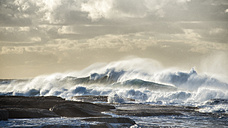 Australia, New South Wales, Sydney, Tasman Sea, waves, surf - GOAF000049