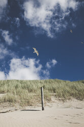 Seagulls flying over beach dune - CHPF000290
