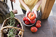 Woman's hands holding tomato - KNTF000452