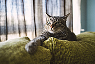 Tabby cat relaxing on couch - RAEF001439