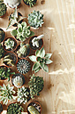Cactus and succulents on wood - RTBF000262