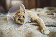 Portrait of cat with Elizabethan collar lying on bed - RAEF001446