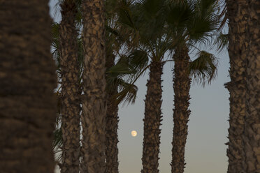 Spain, Bahia de Mazarron, Moon between palm trees at dusk - SKCF000176