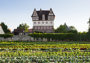 Germany, Nuremberg, Neunhof, view to Neunhof Castle with vegetable fields in the foreground - SIE007102