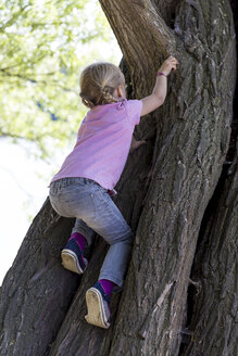 Back view of little girl climbing on a tree - JFEF000799