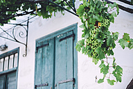 Greek, Cyclades, hanging grape vine in front of facade - GEMF000983