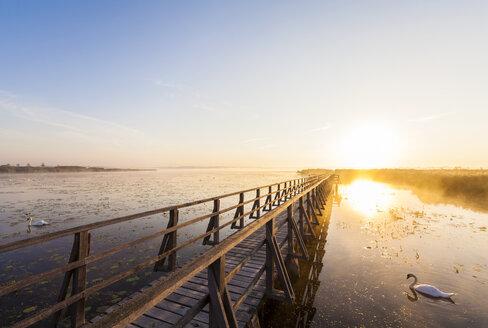 Germany, Bad Buchau, Lake Feder, wooden boardwalk in the morning - WDF003736