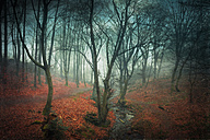 Germany, Wuppertal, Forest at end of winter - DWIF000782