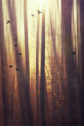 Germany, Wuppertal, Morning sun in the forest - DWIF000791