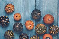 Ornamental pumpkins on blue wood - RTBF000332