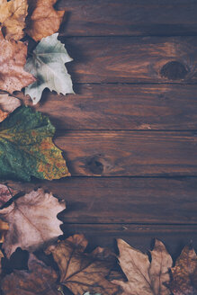 Autumn leaves on wood - RTBF000335