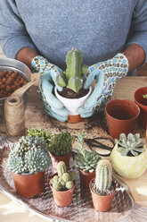 Young man transplanting cactus on wooden table - RTBF00372