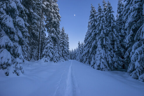 Germany, Lower Saxony, Harz National Park in the evening - PVCF00904