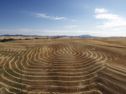 USA, Washington State, Palouse hills, wheat fields - BCDF00016