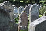 UK, Cumbria, Lanercost, old gravestones on a graveyard - ELF01820