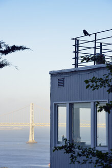 USA, California, San Francisco, bird on roof terrace in front of Oakland Bay Bridge - BRF01366