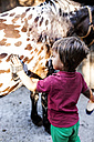 Little boy grooming horse - VABF00793
