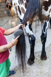 Little boy brushing horse tail - VABF00796