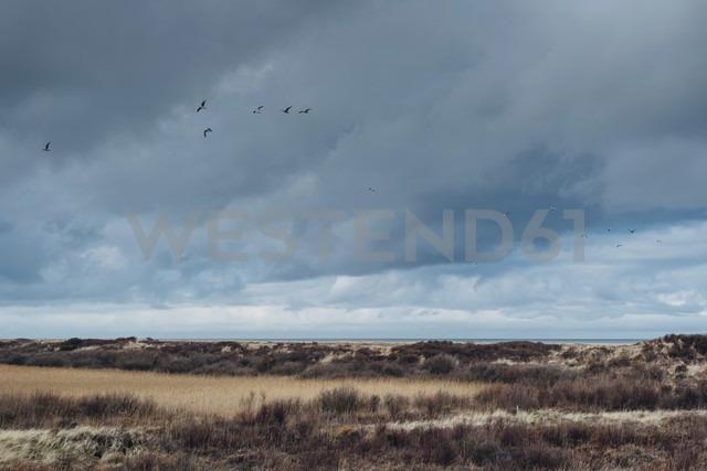 Denmark, Skagen, dune landscape - MJF02009