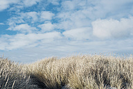 Denmark, Hals, dunes at the Baltic Sea - MJF02027