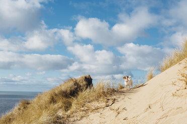 Denmark, North Jutland, dog in sand dune - MJF02039