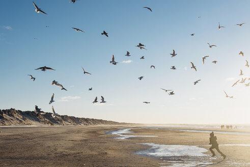 Denmark, Blokhus, boy chasing flock of seagulls on the beach - MJF02078