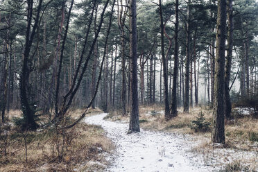 Denmark, Hals, coastal forest in winter - MJF02081