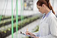 Female scientist checking plants in greenhouse - ZEF10421