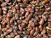 Oman, harvested dates - AMF05025