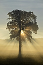Germany, Upper Bavaria, Landsberied, Backlit tree at sunrise - GNF01365