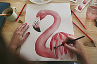 Woman's hand painting aquarelle of a flamingo on desk in her studio - RTBF00452