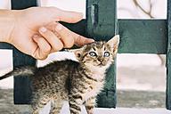 Man's hand petting a tabby kitten - GEMF01137