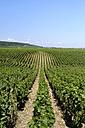 France, Burgundy, Domaine de la Romanee-Conti, Vineyard - HLF00997