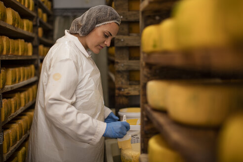 Cheese factory worker controlling maturation of cheese - ZEF11021