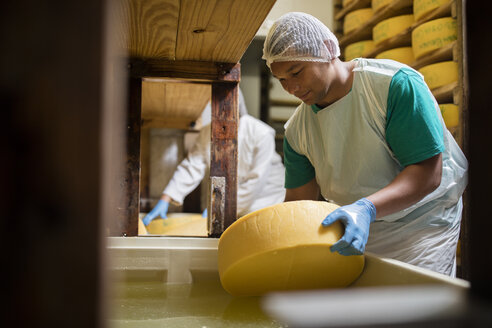 Cheese factory worker putting cheese into salt bath - ZEF11033