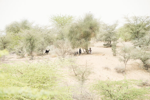 India, Rajasthan, goat herder sitting under a tree - BMA00230