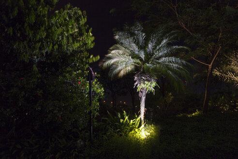 Singapore, illuminated palmsin a garden - BMA00245
