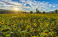 Italy, Umbria, sunflower field in the evening twilight - LOMF00435