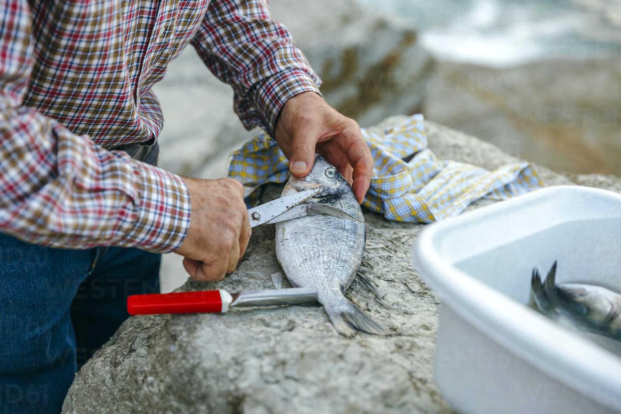 Senior man cutting fins of caught fish - DAPF00443 - David Pereiras/Westend61