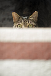 Top view of starring cat - RAEF01529