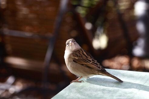 Sparrow - JTF00782