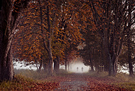 Germany, Hesse, Moerfelden-Walldorf, Moenchbruch, autumnal forest track with two cyclist in the fog - MPAF00081