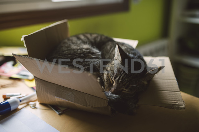 Tabby cat sleeping inside a small cardboard box at home - RAEF01532