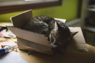 Tabby cat sleeping inside a small cardboard box at home - RAEF01532