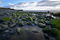 Iceland, coastal landscape in Northern Iceland - FDF00207