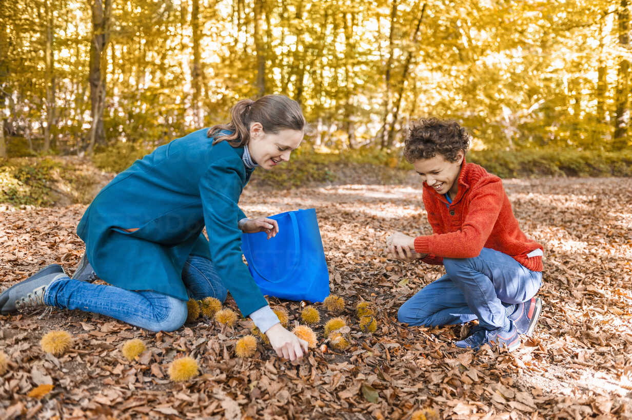Mother and son collecting sweet chestnuts in the autumnal forest - DIGF01412 - Daniel Ingold/Westend61
